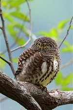 Owl standing on tree, bokeh