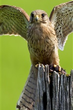 Preview iPhone wallpaper Owl, wings, stump
