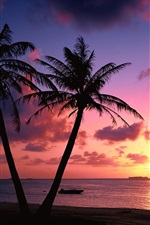 Pair of palm trees, sea, coast, sunset, clouds, red sky