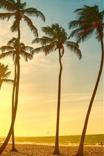 Preview iPhone wallpaper Palm trees, sea, beach, sunset