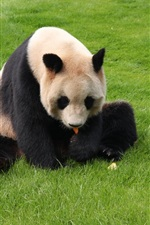 Preview iPhone wallpaper Panda rest in grass