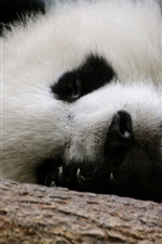 Preview iPhone wallpaper Panda sleep
