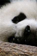Sono panda