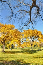 Preview iPhone wallpaper Park, trees, autumn, yellow leaves, grass