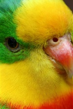 Preview iPhone wallpaper Parrot head close-up, colorful feathers, beak, eye