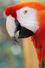 Preview iPhone wallpaper Parrot, red feather, bokeh