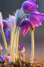Preview iPhone wallpaper Pink flowers, stem, bokeh
