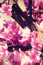 Preview iPhone wallpaper Pink flowers, tree, twigs, spring