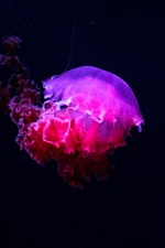 Preview iPhone wallpaper Pink jellyfish, underwater
