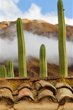 Preview iPhone wallpaper Plants cacti, rooftops, clouds, fog
