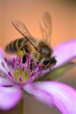 Preview iPhone wallpaper Purple flower, bee, bokeh