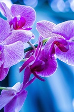 Preview iPhone wallpaper Purple flowers, orchid