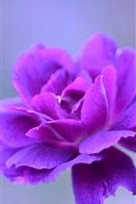 미리보기 iPhone 배경 화면 자주색 꽃잎 꽃 매크로 사진, bokeh