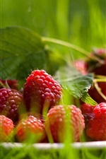 Preview iPhone wallpaper Raspberry, grass
