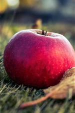 Preview iPhone wallpaper Red apple, grass, leaf