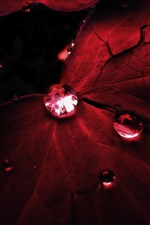 Preview iPhone wallpaper Red leaves, water drops