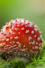 Preview iPhone wallpaper Red mushroom, grass