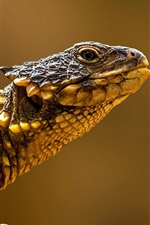 Preview iPhone wallpaper Reptiles, lizard side view