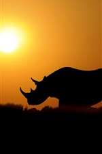 Preview iPhone wallpaper Rhinoceros at sunset