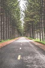 Preview iPhone wallpaper Road, trees