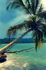 Preview iPhone wallpaper Sea, palm tree, sunshine