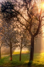 Spring, trees, flowers, grass, sun rays