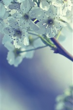 Preview iPhone wallpaper Spring, white flowers, twigs, bokeh