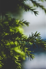 Preview iPhone wallpaper Spruce twigs, blurry background