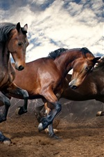 Preview iPhone wallpaper Three brown horses run