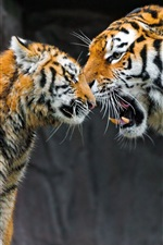 Preview iPhone wallpaper Tiger mother and cub, caring