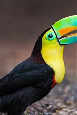 Preview iPhone wallpaper Toucan, beak, bird