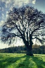 미리보기 iPhone 배경 화면 나무, 푸른 잔디, 그림자, 태양 광선