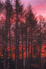 Preview iPhone wallpaper Trees, red sky, sunset