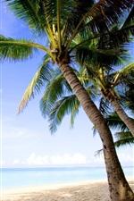 미리보기 iPhone 배경 화면 열대, 야자, 해변, 바다, 자연