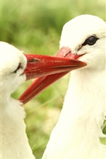 Preview iPhone wallpaper Two white birds, storks