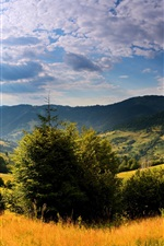 Ukraine, nature landscape, trees, grass, mountains, clouds, sun