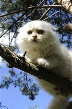 Preview iPhone wallpaper White Scottish fold cat on tree