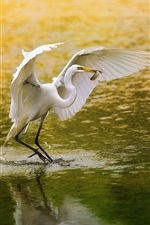 Preview iPhone wallpaper White bird, egret, fishing, lake, water
