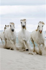 Preview iPhone wallpaper White horses running, sands, sea