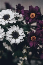 Preview iPhone wallpaper White purple flowers, bouquet