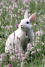 Preview iPhone wallpaper White rabbit in the wildflowers