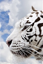 Preview iPhone wallpaper White tiger side view, head, clouds