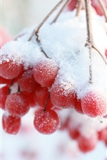 Preview iPhone wallpaper Winter, snow, red berries, twigs