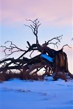 미리보기 iPhone 배경 화면 겨울, 눈, 나무, 차질, 황혼
