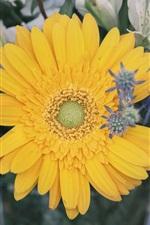 Preview iPhone wallpaper Yellow daisy flower, bouquet
