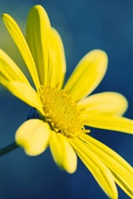 Preview iPhone wallpaper Yellow flower, blue background