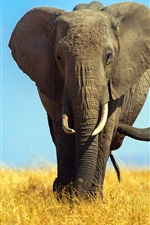 Preview iPhone wallpaper Africa, elephants, cub