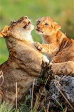 Preview iPhone wallpaper African, lioness and lion cub, wildlife