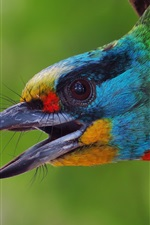 Preview iPhone wallpaper Asian woodpecker, head, colorful feather, hollow tree