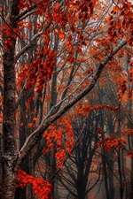 Preview iPhone wallpaper Autumn, forest, trees, red leaves, fog
